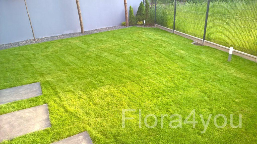 Trawnik z rolki pierwsze koszenie