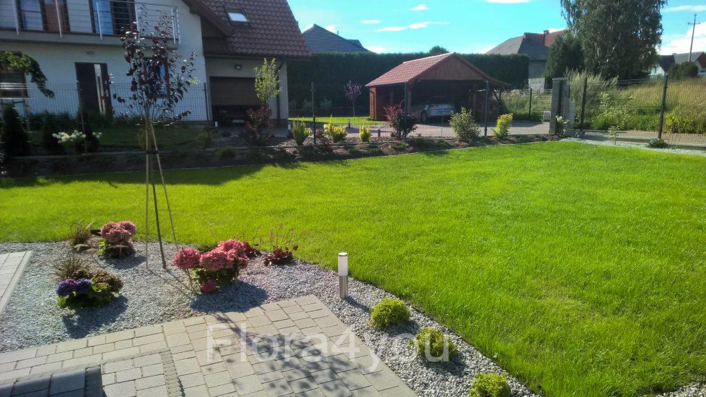 Trawnik z siewu przed pierwszym koszeniem