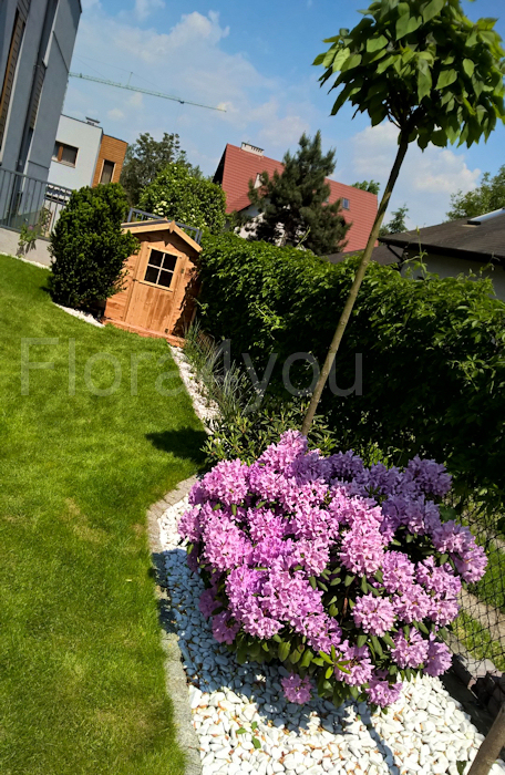 Ogród w maju