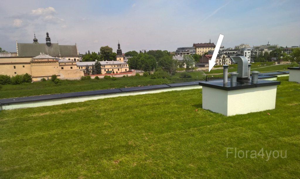 trawnik z rolki na dachu w centrum krakowa