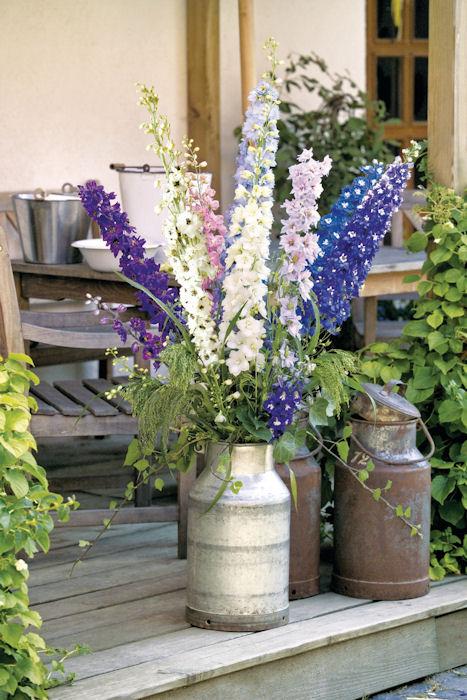 kwiaty ostrozki ogrodowej w kompozycji