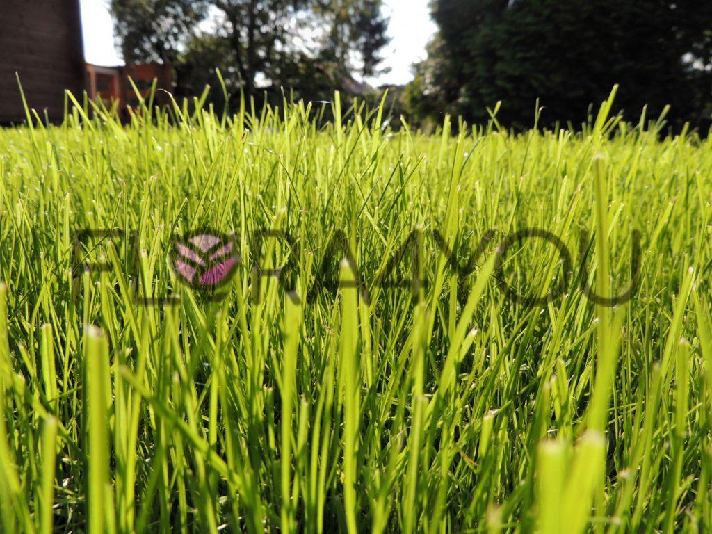 trawnik z bliska