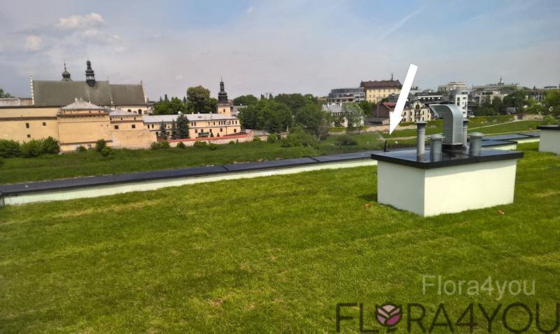 trawnik z rolki na dachu bloku w centrum Krakowa