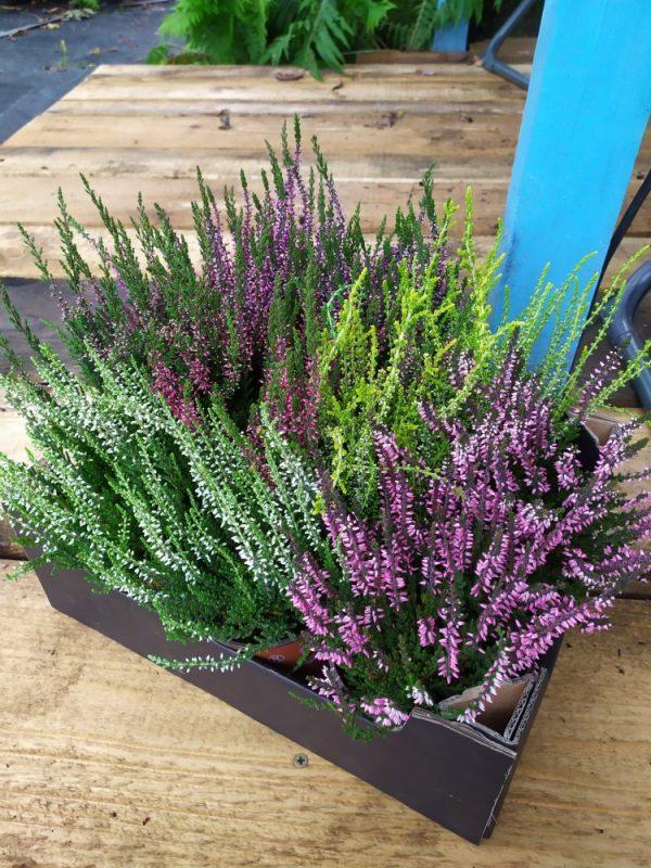 kwiaty ogrodowe przygotowane do wysyłki