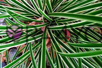 niska trawa w cienistym ogrodzie