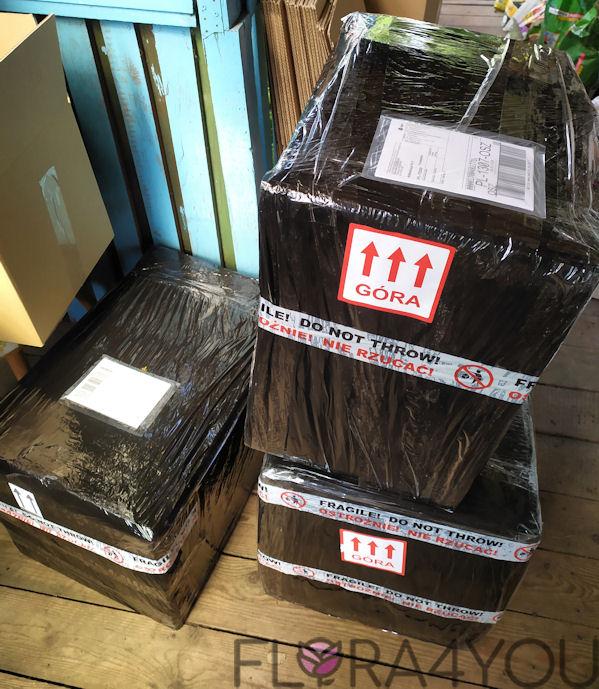 paczki z roślinami przygotowane do wysyłki