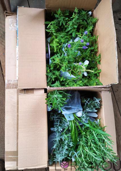 sadzonki roślin w kartonach gotowe do wysyłki
