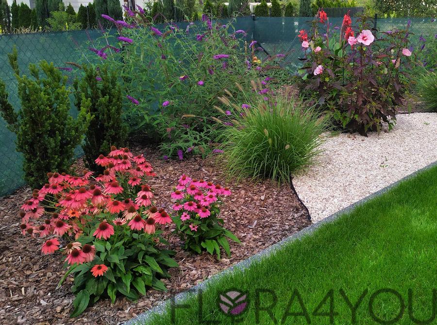 rabata w ogrodzie z bylinami i trawami ozdobnymi