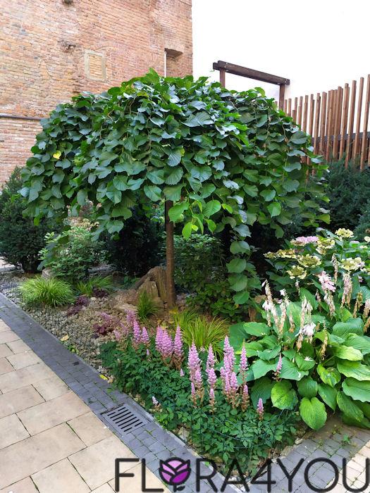 drzewa liściaste wiąz w ogrodzie z bylinami u stup