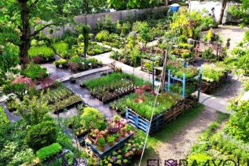 centrum ogrodncze w krakowie