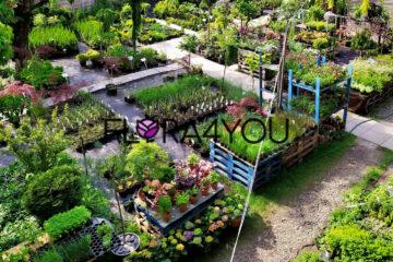 sklep wysyłkowy z sadzonkami bylin, kolekcja roślin ozdobnych w Krakowie